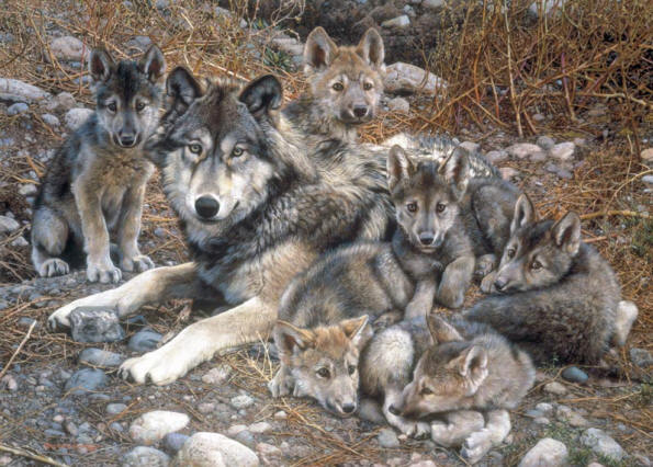 Brenders - Den Mother Wolf Family