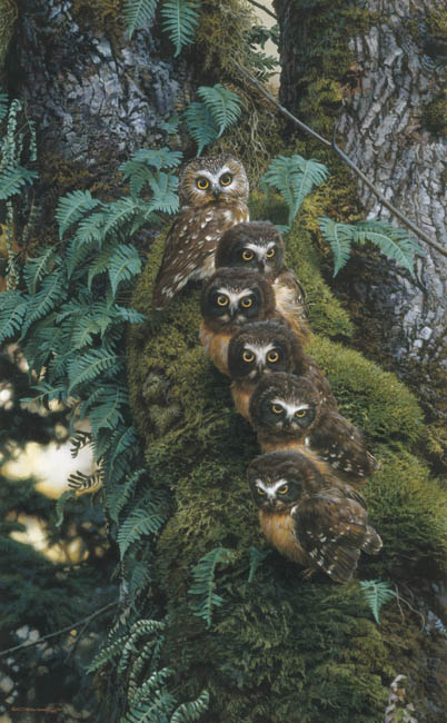 Carl Brenders - Family Tree - Owls