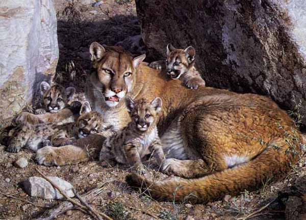 Rocky Camp Cougar Family by Carl Brenders