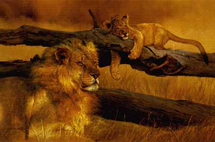 Waiting Game - Lion and Cub by Dino Paravano
